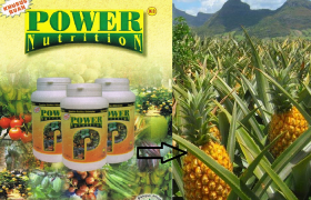 Pupuk Power Nutrition Nutrisi Kusus Tanaman Buah Nasa